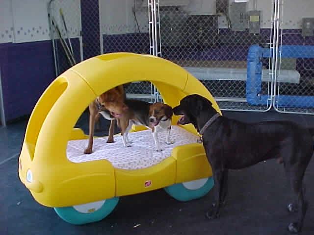 Transportation at Happy Tails