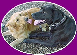 Friends at Happy Tails