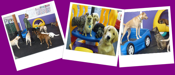 Play Time and Ruckus at Happy Tails